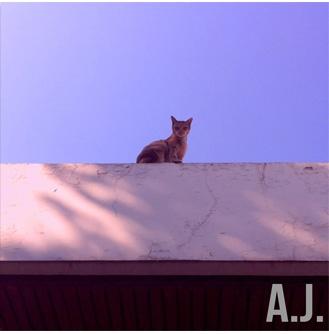 SPONTANEUS MORNING BY A.J.