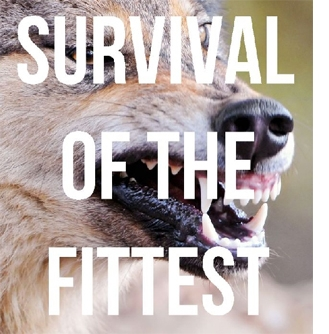 SURVIVAL OF THE FITTEST by BASTARDS OF YOUNG